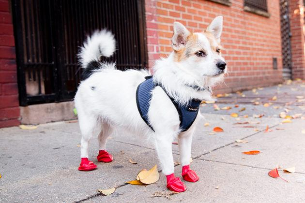 The Best Dog Boots | Reviews by Wirecutt
